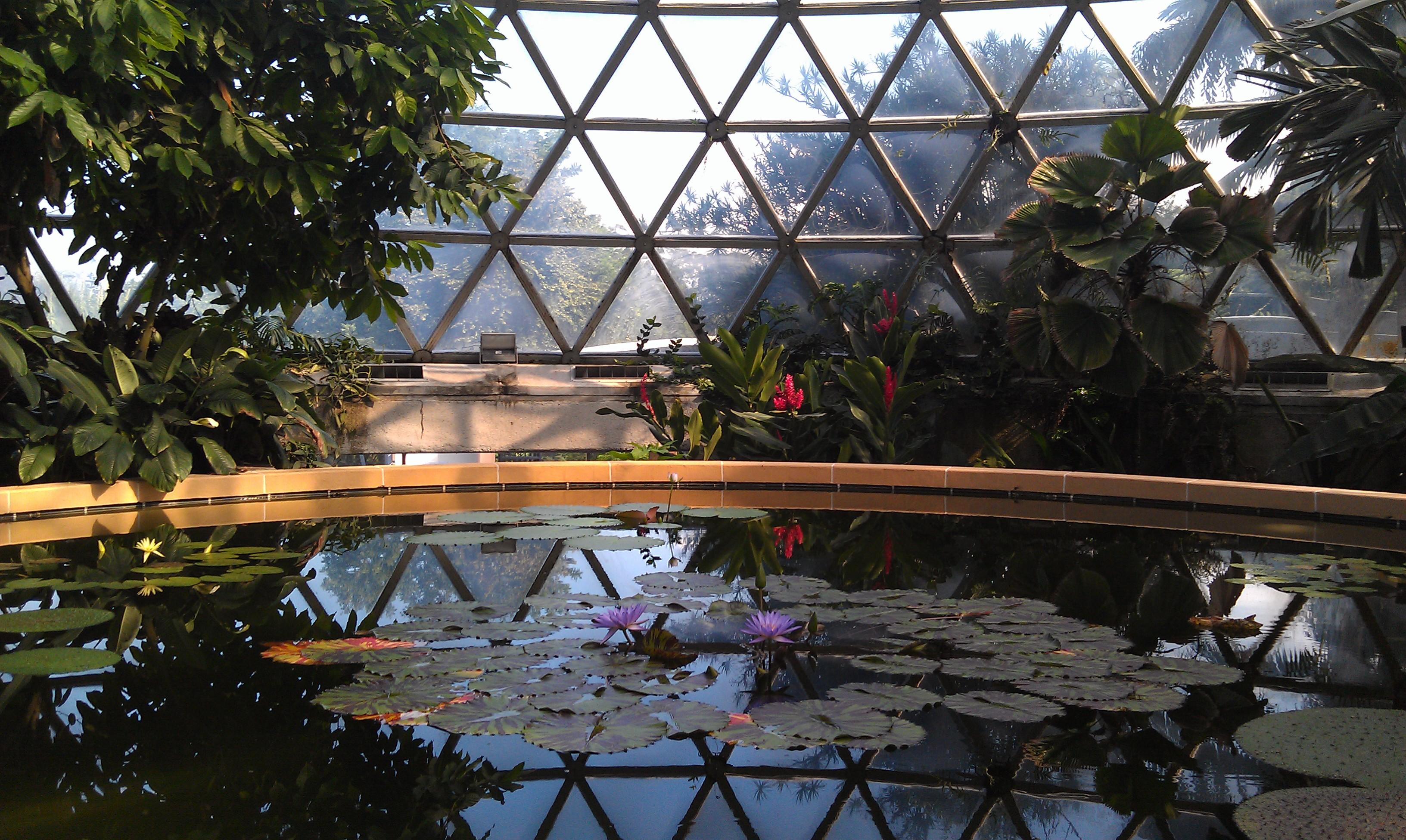 Brisbane Botanic Gardens Mt Coottha Venue Hire Enquire Today